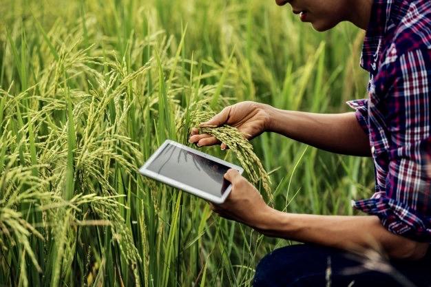 https://educfrance.org/wp-content/uploads/2020/02/agriculteur-debout-dans-riziere-tablette_1150-6062.jpg