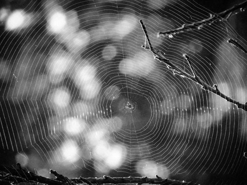 https://educfrance.org/wp-content/uploads/2020/02/spiderweb-web-spider-tree-trap-nature-cobweb.jpg
