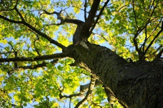 https://educfrance.org/wp-content/uploads/2020/02/wood-nature-leaves-tree-1.jpg