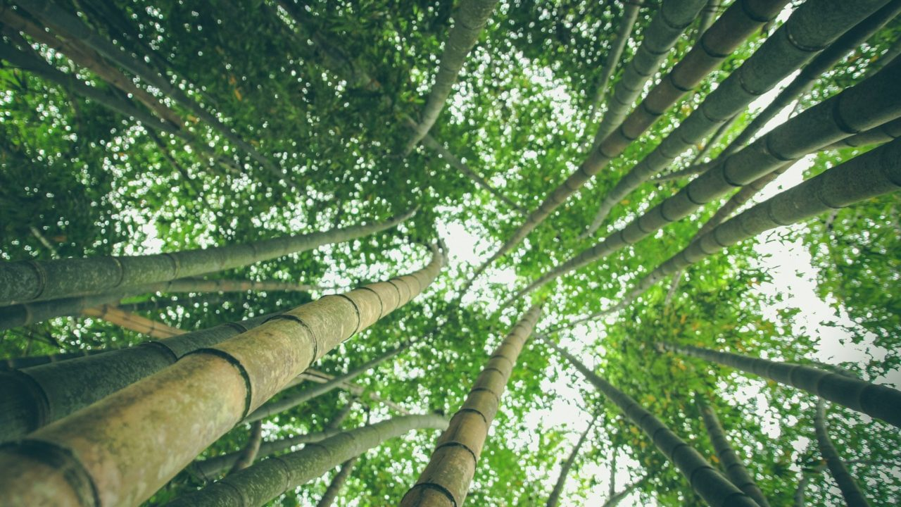 https://educfrance.org/wp-content/uploads/2020/04/bamboo-forest-1245966_1920-1280x720.jpg