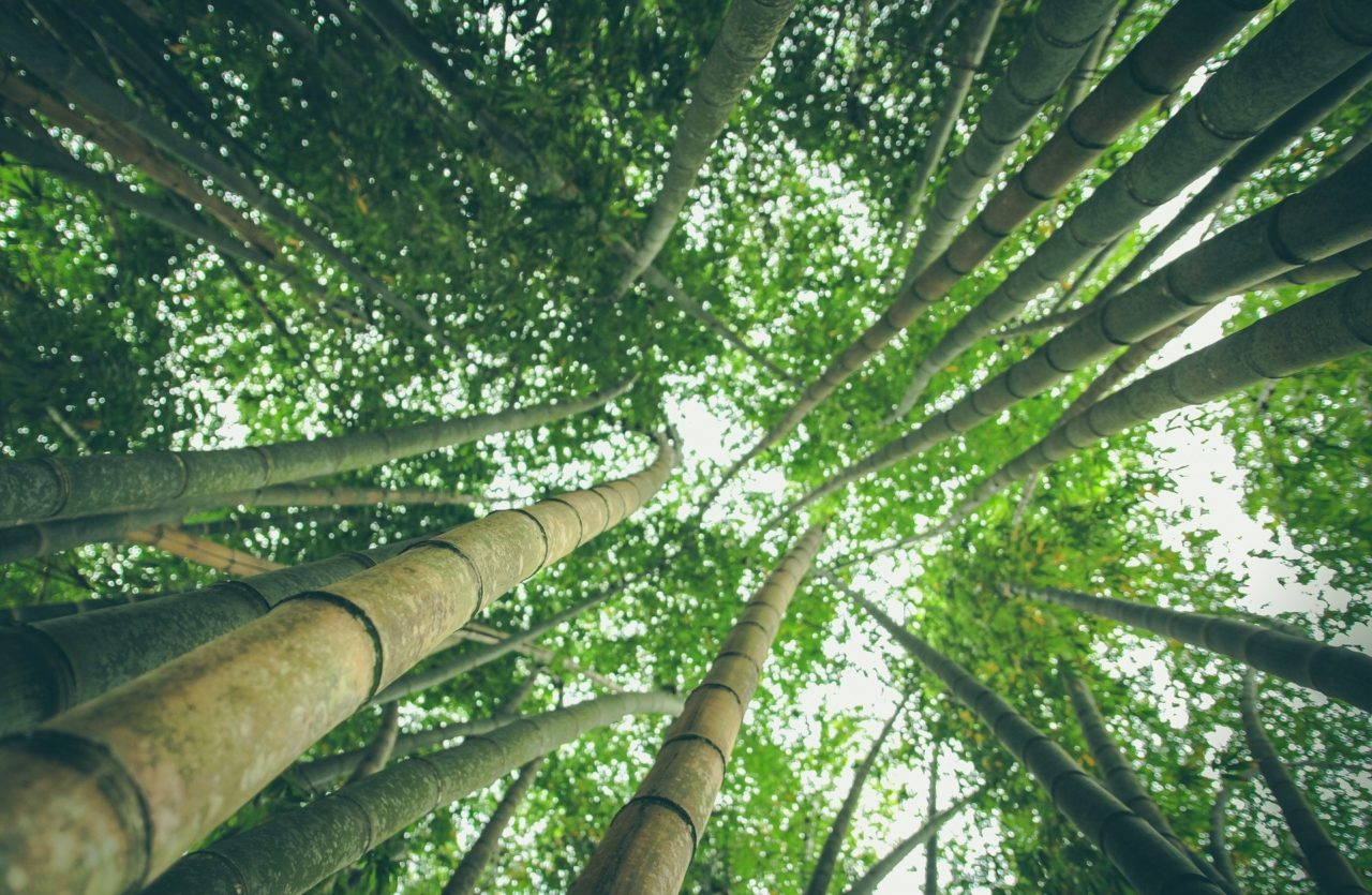 https://educfrance.org/wp-content/uploads/2020/04/bamboo-forest-1245966_1920-1280x835.jpg