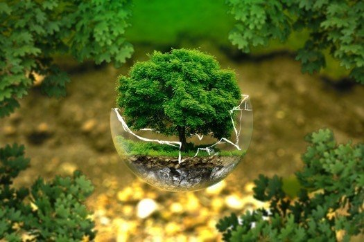 https://educfrance.org/wp-content/uploads/2020/04/digital-composite-image-of-tree-in-broken-glass-ball.jpg