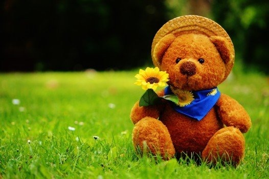 https://educfrance.org/wp-content/uploads/2020/04/teddy-bear-bear-bears-stuffed-animal-teddy-cute-1.jpg