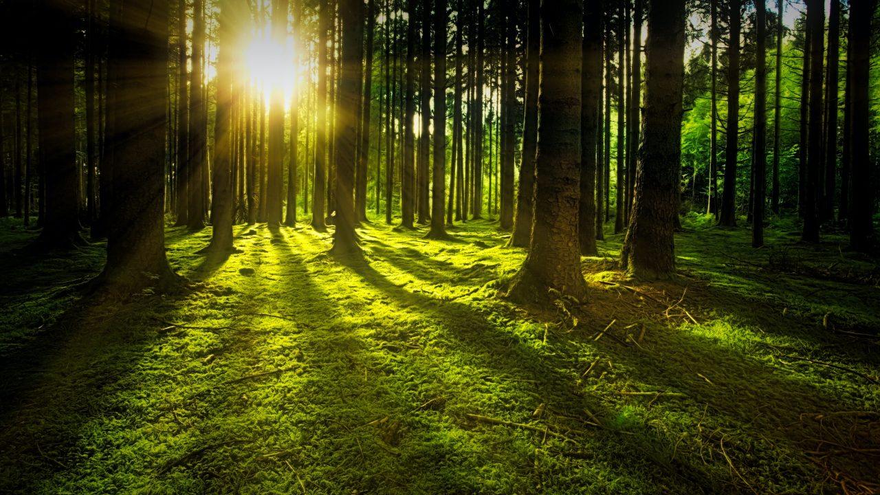 https://educfrance.org/wp-content/uploads/2020/06/arbres-bois-brindilles-espace-exterieur-1125776-1280x720.jpg