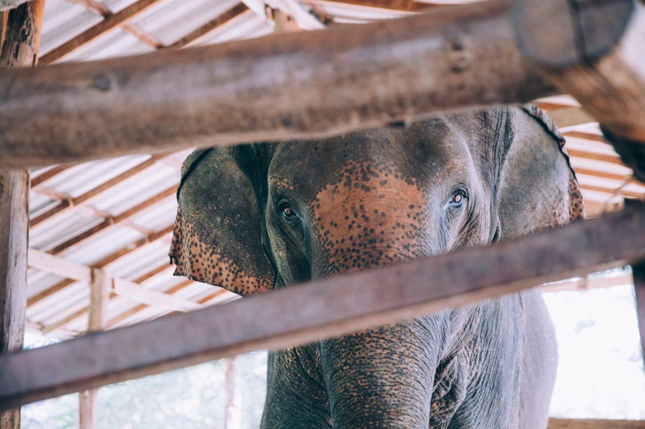 https://educfrance.org/wp-content/uploads/2020/08/elephant-peek-a-boo-1280x853.jpg
