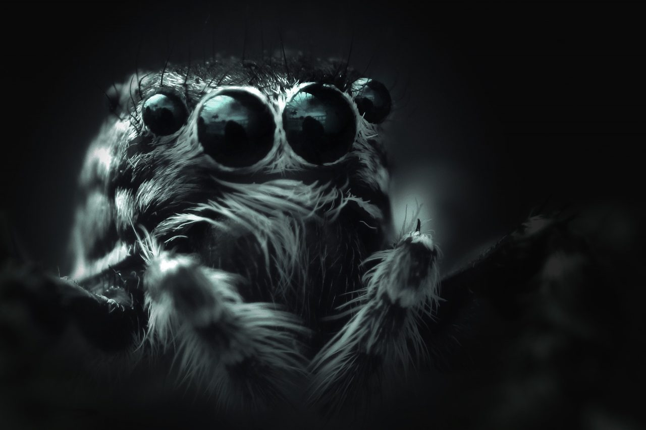 https://educfrance.org/wp-content/uploads/2020/10/spider-bouncing-4449407_1920-1280x853.jpg